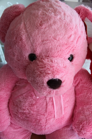 Pink teddy bear  Stock Photo - 18013123