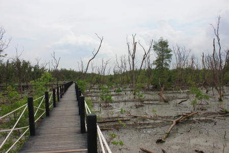 Bridge walkway in the Mangrove forest Stock Photo - 18275138