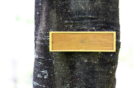The label attached message on tree. Stock Photo - 18725681
