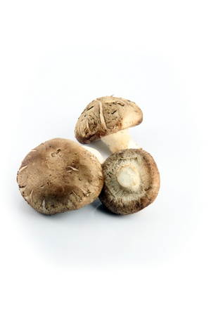 The Shiitake Mushrooms on the white Background  Stock Photo