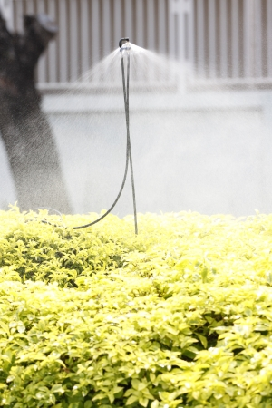 The Sprinkler watering the yellow flowers in the morning. photo