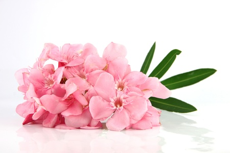 Bouquet of light pink flowers on a white background. photo