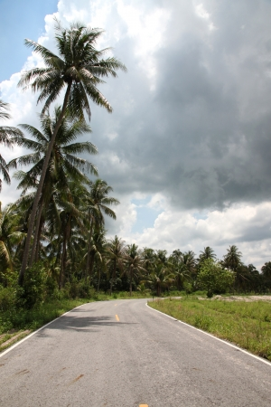 Road with coconut trees  photo
