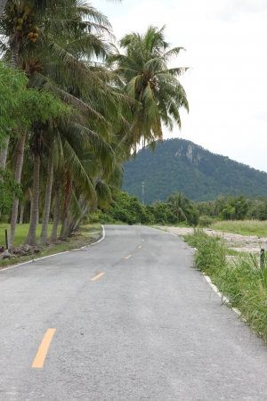 Road with coconut trees Overlooking the mountains  photo