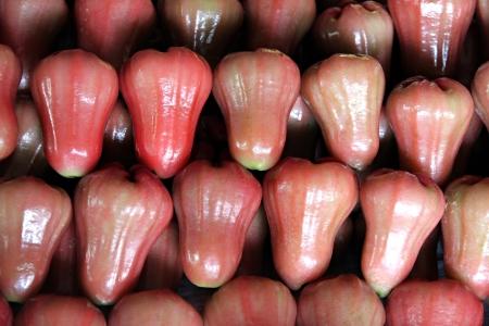 The Syzygium fruits