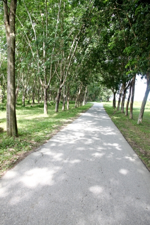 either: The road through the park and the trees on either side.