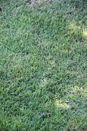 romp: The Green Lawn in the backyard.