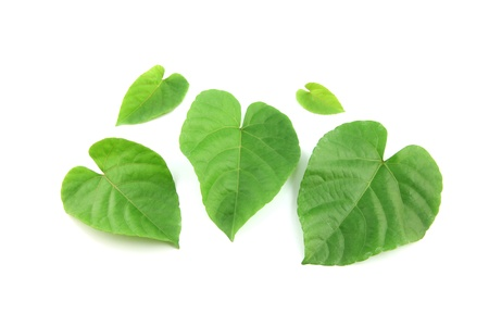 Green leaves shaped like heart on white background  photo