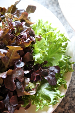 Closeup Vegetable salad in a white dish  photo