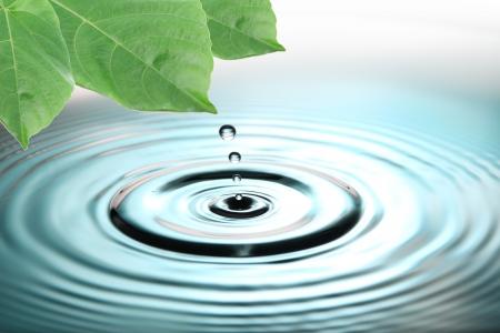 緑の葉の画像の焦点し、青い水が値下がりしました。 写真素材