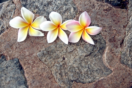The Picture focus Frangipani flowers are yellowish white on stone Background. photo