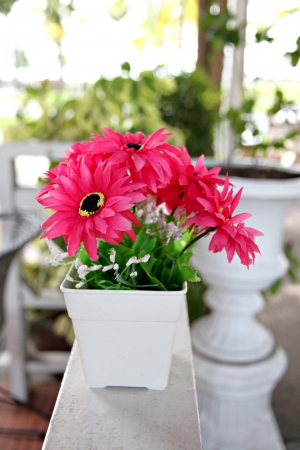 Pink flowers in white potted and Placed on white wooden balcony  photo