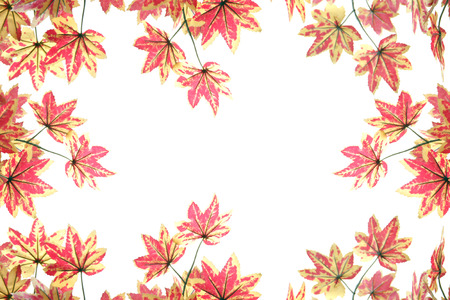 Yellowish orange maple leaves on white