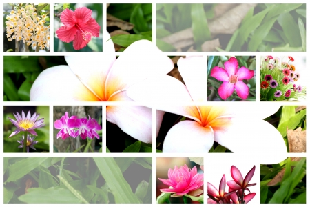 The mix Flower in table of Tropical flower wide variety  photo