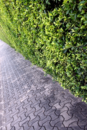 sidewalks: Sidewalks in park and tree wall. Stock Photo