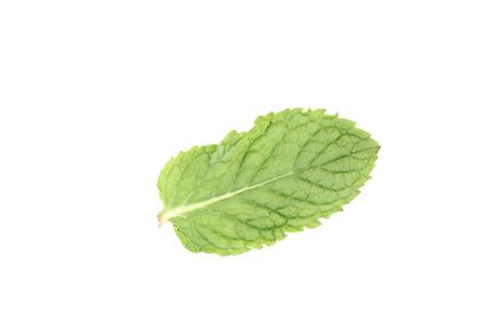 hortel� pimenta: Pimenta Mint isolado no fundo branco Banco de Imagens