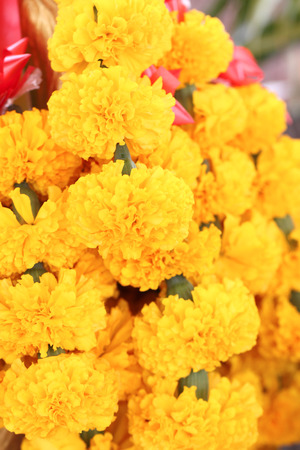 worshipers: Bouquet of marigold in their worshipers
