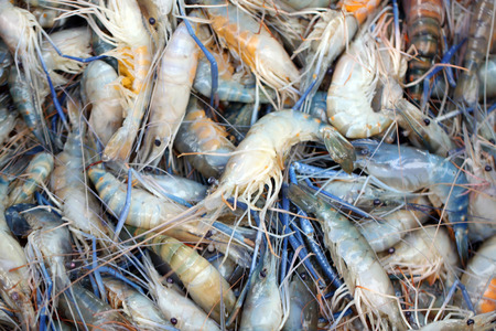 Fresh shrimps in seafood market for the background image. photo
