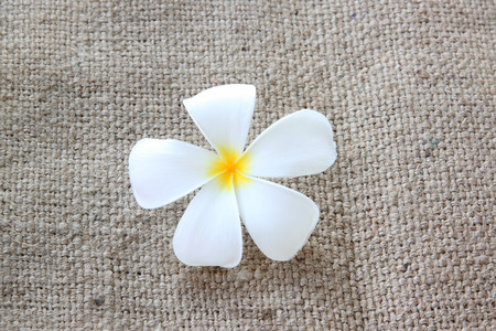 white plumeria or frangipani on sackcloth of background. photo