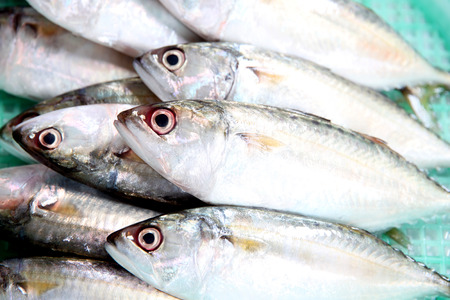 fresh mackerel fish ingredient for cooking. Stock Photo - 28055636