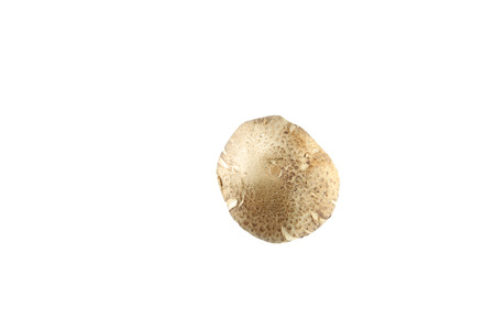 shiitake mushrooms of isolated on white background. photo