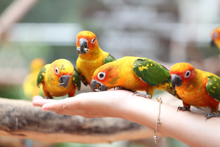 many of parrot is eating foods on people hand. photo