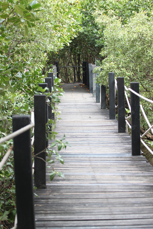 mangrove forest: Mangrove forest wooden walkway for nature tourism. Stock Photo