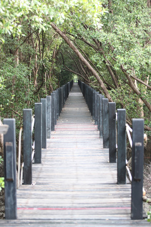 Mangrove forest wooden walkway for nature tourism. photo
