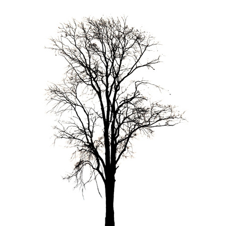 Silhouette of dead tree on white background. photo