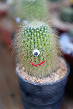 Small cactus is decorated in colorful fancy. photo