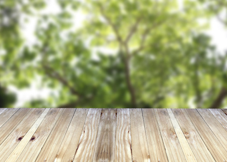 broad leaf: Broad planks and tree in garden of blur background for design. Stock Photo