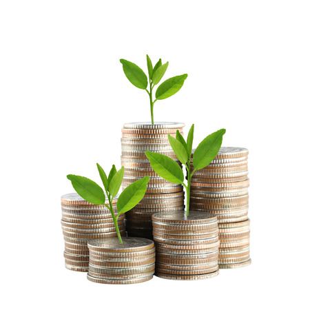 silver Thailand coins stack isolated and green treetop demonstrate the concept of growth in economic.