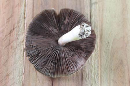 fondo legno: funghi velenosi sullo sfondo di legno.