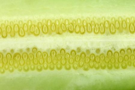 freshness: textura de frescura pepino para los alimentos de fondo. Foto de archivo