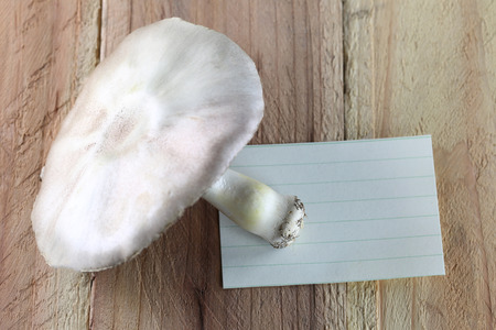 note paper: poisonous mushrooms and note paper on wood background. Stock Photo