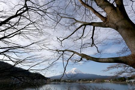 stillness: Mount Fuji in kawaguchiko lake side and branch tree,Japan.