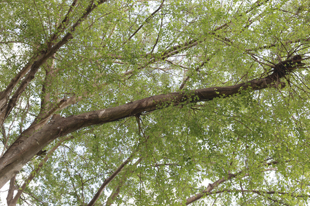 large tree: Under a large tree in the backyard.