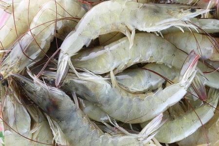 camaron: camarones crudos frescos como guarnición en la cocina, el camarón blanco o la acuicultura vannamei en Tailandia económica muy valorada a las exportaciones. Foto de archivo