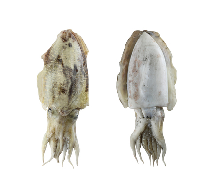 Fresh cuttlefish (Sepia) isolated on white background and have clipping paths.
