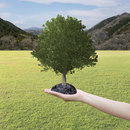 grown: Big Tree grown in the hand and lawn,concept of nature conservation and planting trees. Stock Photo