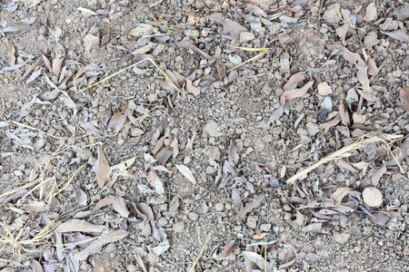 dry leaf: surface of the the soil around the tree and have dry leaf campsites. Stock Photo