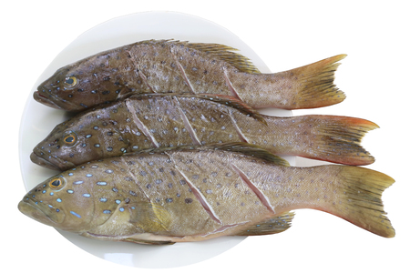 grouper: Fresh grouper fish (Leopard grouper) on dish for the ingredient in cooking and have clipping paths.