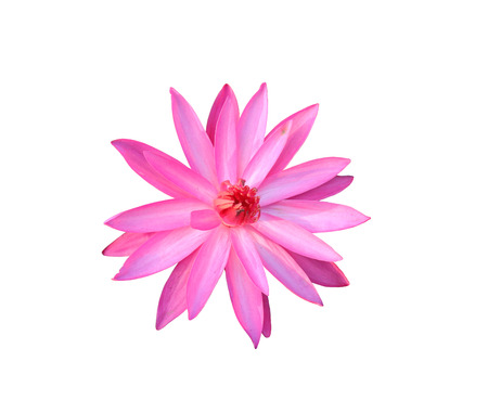 objects with clipping paths: pink lotus isolated on white background and have clipping paths.