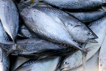 atun rojo: atún de cola larga o el atún de aleta azul en el utensilio para la venta en el mercado de pescado.