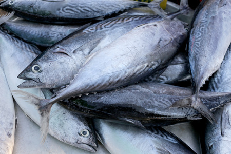 atun rojo: Longtail tuna or Northern bluefin tuna on the utensil for sell in the fish market.