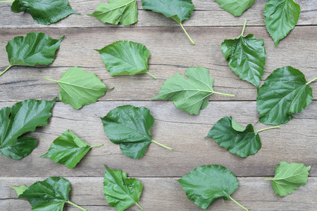 disrupted: Green Leaves of Mulberry disrupted on brown wooden background for design concept of nature. Stock Photo
