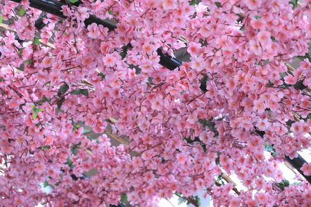 devise: Artificial Pink cherry blossoms (Sakura Flower) in place decorations festive Japanese cuisine foods.