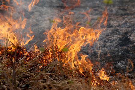 Summer wildfires burning in the Forest at rural area of Khon Kaen,Thailand due to the very hot weather.