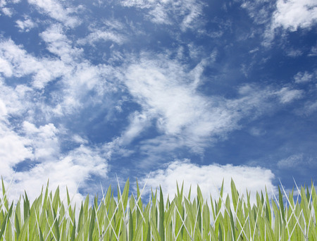 grassy plot: Green leaves of grass and have sky for design nature background.