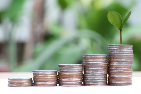 young plant: young plant grown to stack silver coin in business growth concept on wood floor.